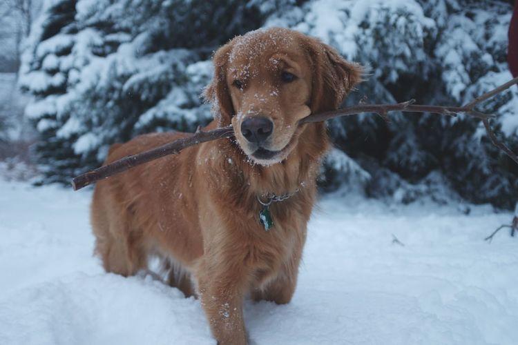 Snowflake Stick Winter Wonderland ❄ Nature One Animal No People