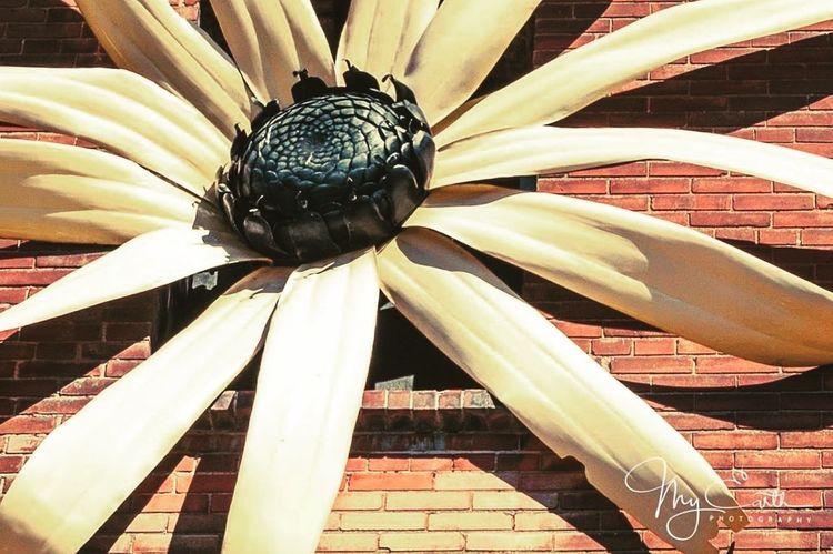 Freshness Outdoors Flower Building Exterior Meta Sunflower Metal Art Metal Artwork