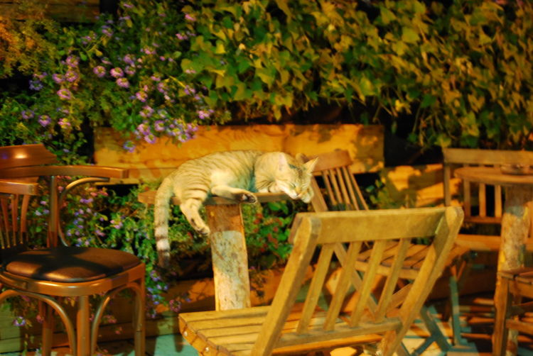Cat sitting on chair in yard