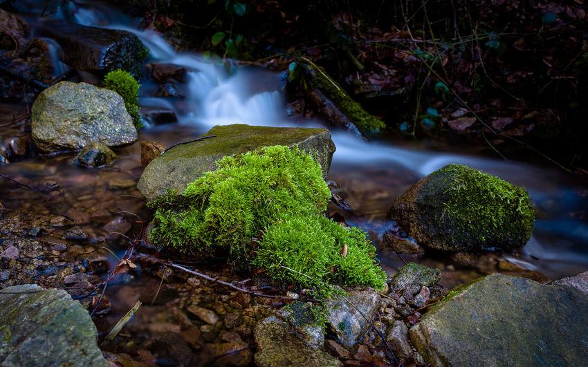 Water Rock Moss