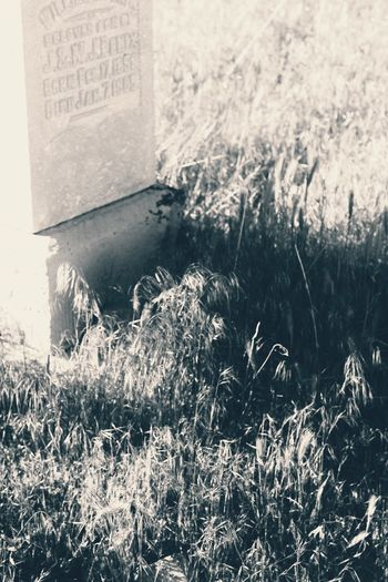 No People Text Grass Outdoors Day Close-up Nature Dark🌌 By Tisa Clark Black & White By Tisa Clark Tombstone Dark Photography Shadow Blackandwhite Shadows & Lights Darkness And Light Gravestone Cemetery