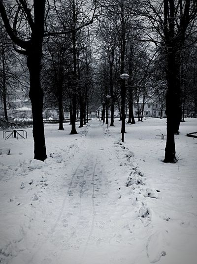 Park dressed by winter