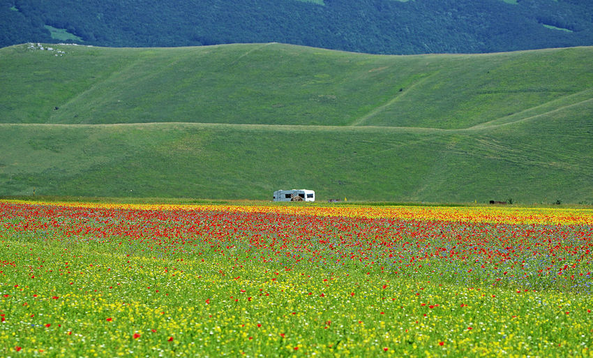 landscape of caravan in a flowery field Caravan Landscape Flowering Flower Meadow Agricultural Field Agriculture Vacations Holiday Tourism Tranquility Isolated Plateau Nature Photography EyeEm Nature Lover Beauty In Nature Flowering Plant Green Color Outdoors Tranquil Scene Environment