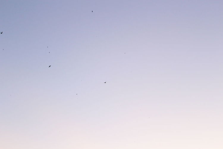 Sky Flying Low