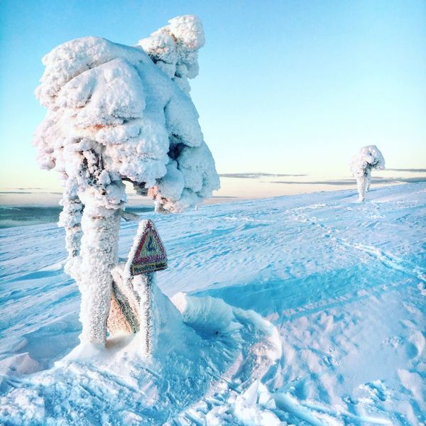Frosty trees Clear Sky Blue Cold Temperature Winter Nature Sky Water Beauty In Nature Sea Outdoors Frozen Day Snow Travel Destinations Saariselkå Ivalo Sami Lapland, Finland The Great Outdoors - 2017 EyeEm Awards Perspectives On Nature