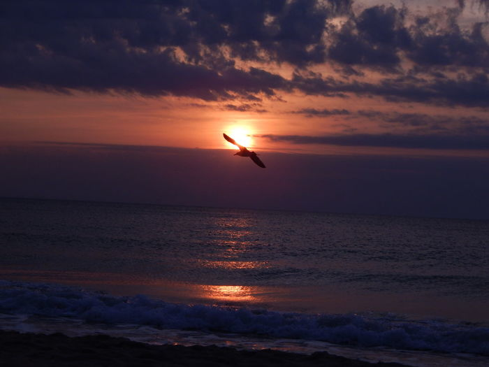 Beach Beauty In Nature Bird Cloud - Sky Golden Sands Beach Holiday Horizon Over Water Reflection Sea Seagull Seascape Sky Summertime Sunrise Live For The Story
