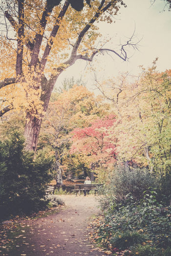 Scenic view of park during autumn
