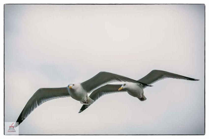 Adorable Birds Birds In Flight SEAGULL IN FLIGHT Seagull
