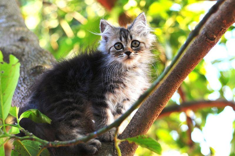 Kitten 🐱 Cat Lovers Cats Of EyeEm Cats 🐱 Tree Portrait Pets Looking At Camera Cute Domestic Cat Animal Themes Close-up Kitten Whisker Cat Persian Cat  Yellow Eyes