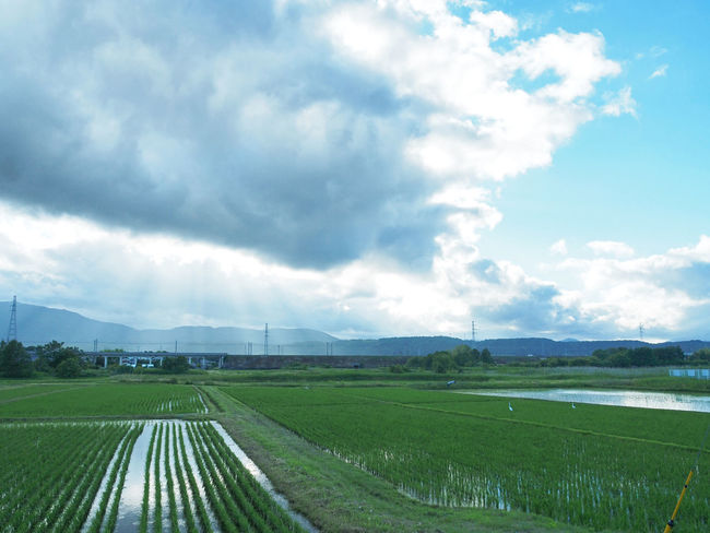Scenery of beautiful rural paddy fields (綺麗な田舎の水田の風景) Ad Agriculture Beautiful Blue Color Copy Space Green Nature Quiet The Countryside Black Color Blue Sky Brown Countryside Evening Landscape Margin No Person Nobody Paddy Field Silence Sky Text Space White 水田 田舎道