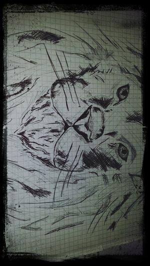 Me Draw Lion Blackandwhite