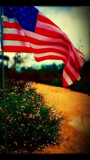 Flag American Flowers Yellow Flowers American Flag Flag Patriotism Cultures Motion Outdoors No People Close-up Stars And Stripes Day Nature