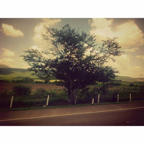 Photography Tree Byme Nature Love♡