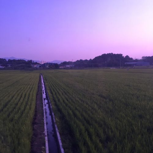 IntheCountry Myhometown Ruralarea 시골 고향
