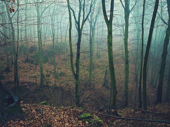 Czech Czech Republic Misty WoodLand Bare Tree Bare Trees Beauty In Nature Fog Foggy Forest Mist Moravian Moravian Karst Nature No People Outdoors Ravine Scenics Tree