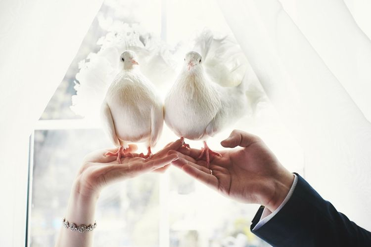 Close-up of hands holding white birds