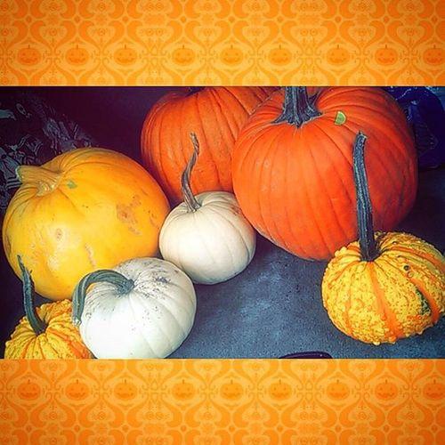 The ones we got today . . Probably going back for more 😄🎃❤❤ Pumpkin Pumpkins Jackolantern Matthys Halloween Fall Yellow White Orange