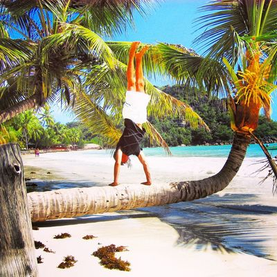 Beach Clear Sky Day Domestic Animals Full Length Handstand  Lifestyles Nature One Animal One Person Outdoors Palm Tree People Pets Rear View Sand Sea Seychelles Sky Summer Tree Tree Vacations Water Yoga