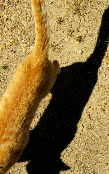 Cat Cats Of EyeEm Furfamily Orange Tabby Cat Light And Shadow Macro Photography Animal PhotographyAnimal Photography Orange Tabby Cat Natural Light Portrait