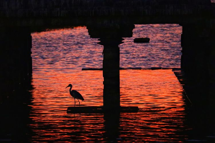 Silhouette bird perching on wooden post in lake during sunset