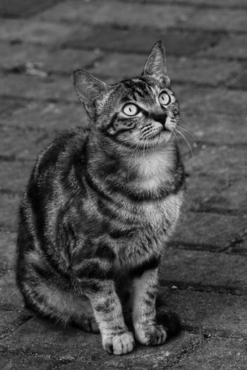 Black And White Domestic Cat Pets One Animal Cat Close-up Outdoors Sitting Animal Themes Sony Tim Wong Hong Kong