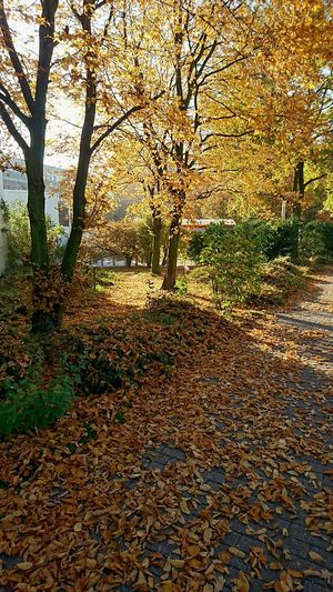 November Fall Trees