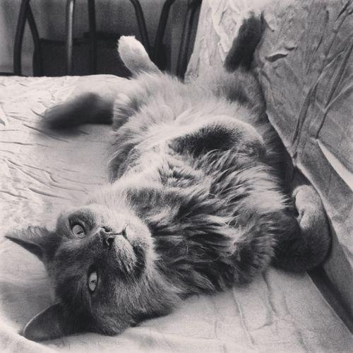 Kitty, Cute