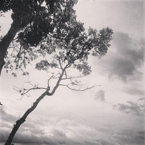 Dotspin Betosalvestrini Art Original Natural Nature Plants Peace Tree Forest Venezuela Sancristobal City - sunset
