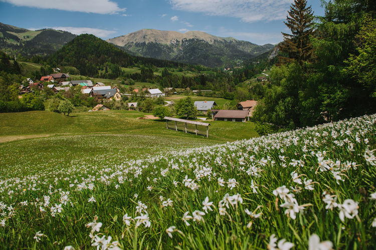 Scenic view of grassy field by houses and mountains