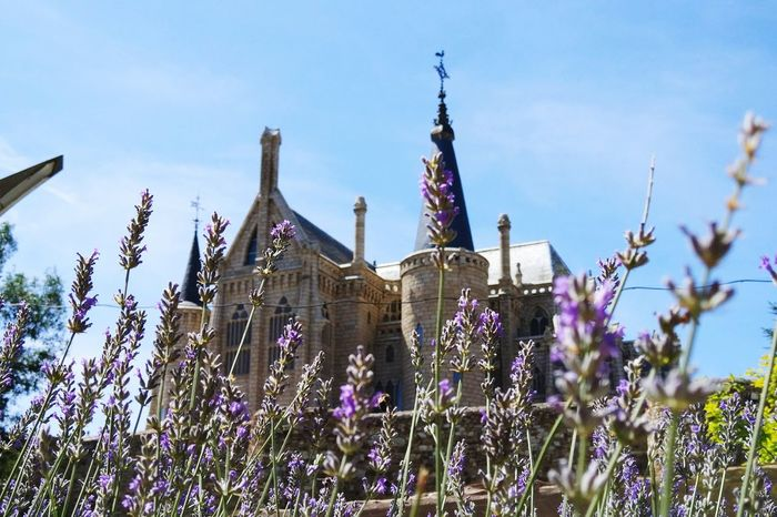 Astorga LeonEsp  Flower Gaudí Architecture Outdoors Travel Destinations No People Nature Day Plant Architecture Clear Sky Sky Cityscape Close-up Beauty In Nature