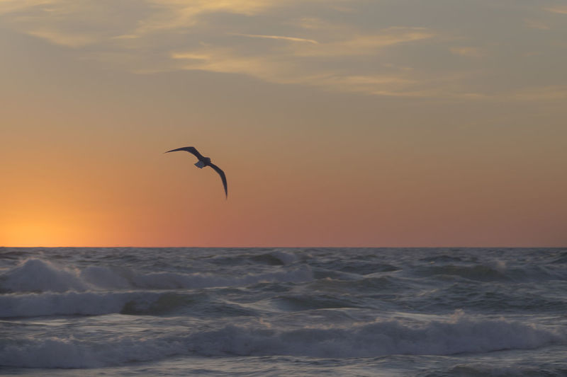 Seagull flying over sea against sky during sunset