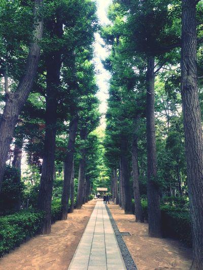 荻窪にこんな公園あるなんて知りませんでした。