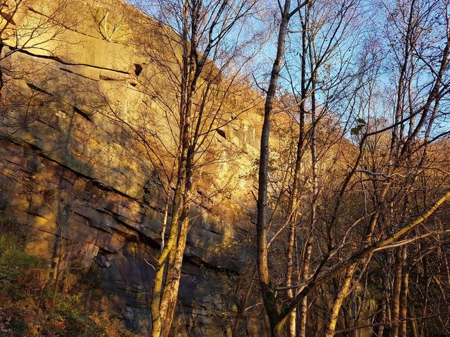 Hell Hole Climbing Heptonstall Quarry Backgrounds Hell Hole Rocks Autumn Bare Tree Landscape Scenics Growth Day Low Angle View Beauty In Nature Nature Tree Outdoors Freshness Tranquility