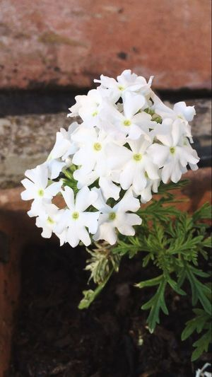 Beauty In Nature Flower White Color