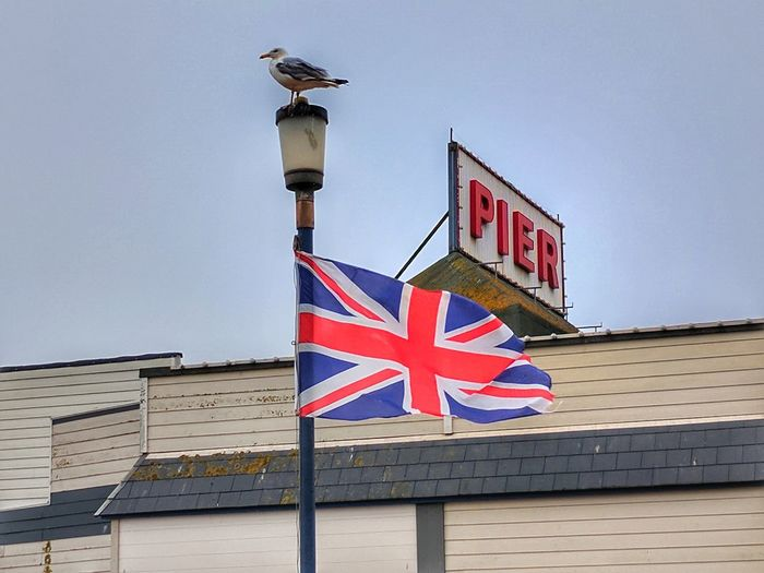 Patriotic Seagull British Holiday Pier Animals In The Wild Architecture Bird Clear Sky Day England Flag Low Angle View No People Outdoors Patriotism Seagull Uk