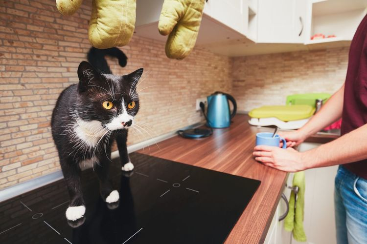Midsection of man standing by cat on glass-ceramic stove top in kitchen