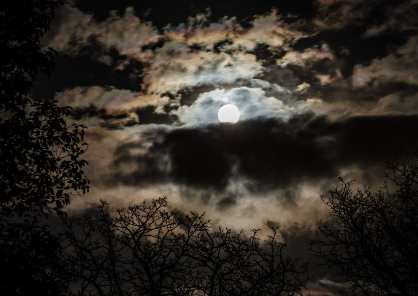 And here's another moon shot surrounded by a silhouette of eerie looking trees. Astronomy Beauty In Nature Cloud - Sky Dark Dark Photography Eerie Full Moon Gothic Low Angle View Moon Moonlight Nature Night Night Photography Nightphotography No People Outdoors Planetary Moon Scenics Silhouette Sky Space Spooky Tranquility Tree