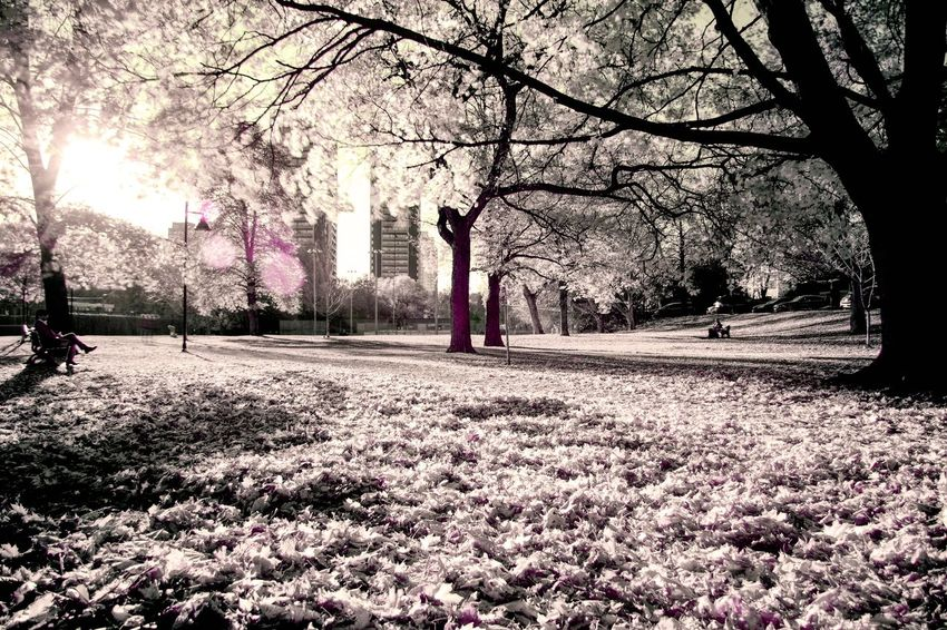 Tree Leisure Activity Lifestyles Nature Outdoors Day Beauty In Nature Beauty In Nature Nature Travel Destinations Infrared Photography Infrared Photo White Beautiful BYOPaper!