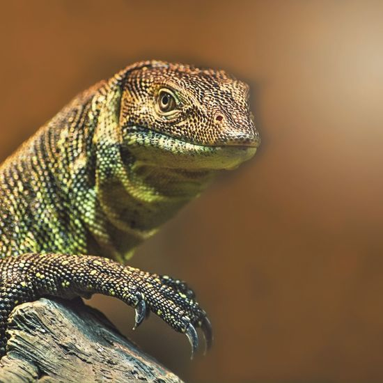 World of Reptiles Animals Instagood Instagram AsDigiClicks Wildlife Zoo EyeEm Nature Lover EyeEm Best Shots EyeEm EyeEm Best Edits