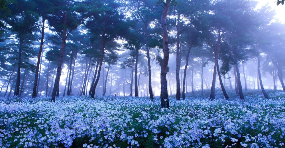 EyeEmNewHere Tree Nature Beauty In Nature Forest Flower Freshness Foggy Morning