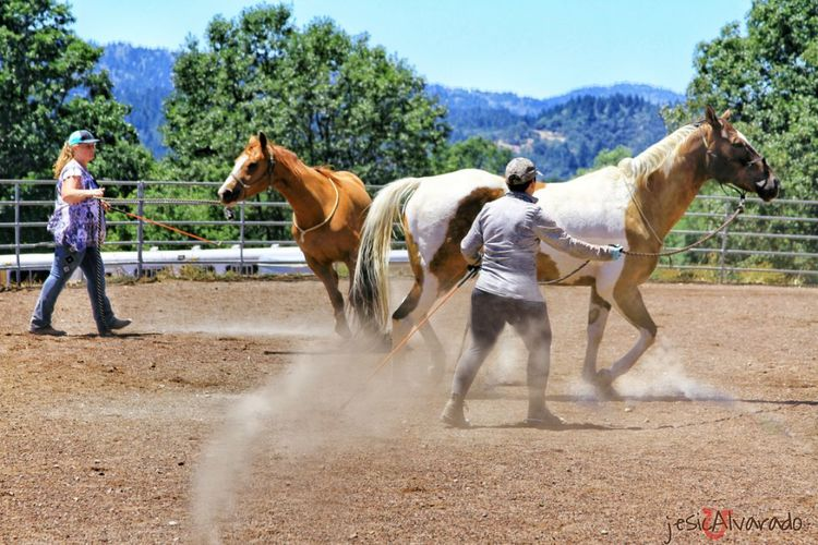 Domestic Animals Horse Outdoors Enjoying Life Summer Admiring Nature's Beauty Horse Life Ranch Life Motion Two People Women Animal Themes Summertime