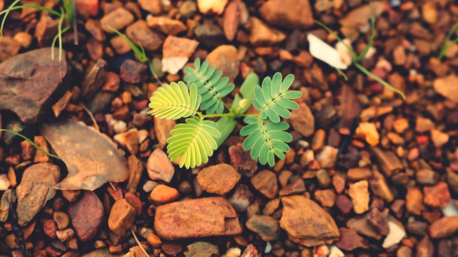Small Plant Growing In The Rocks Leaf Plant Part Nature Growth No People Day Field Directly Above Stone - Object Freshness Plant Close-up Outdoors Rock Land Green Color