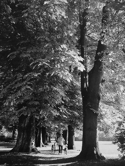 Stadtpark im