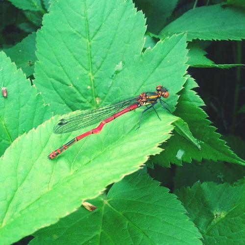 Dragonfly Wildlife & Nature