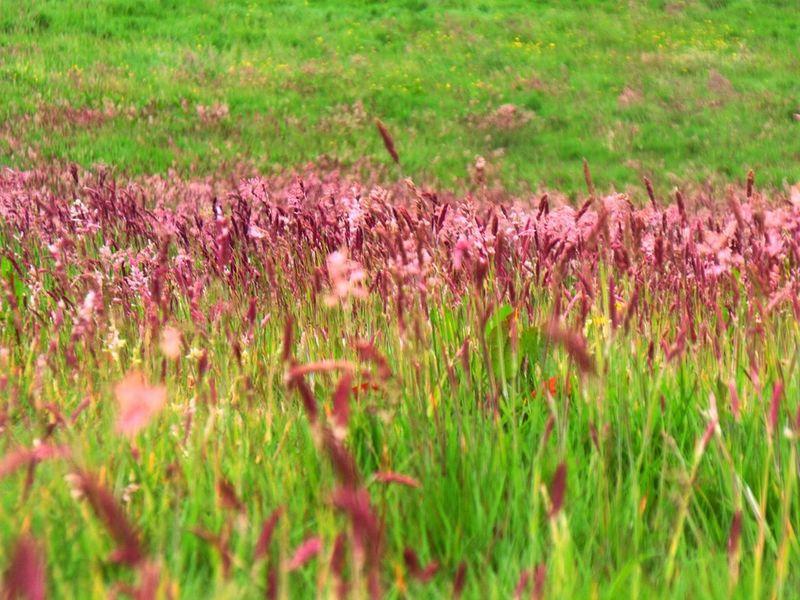 Green Fields West Cork West Of Ireland Landscape Travel Explore