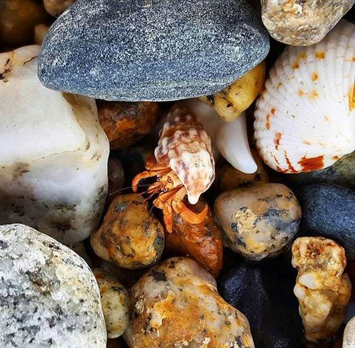 Wee little hermit crab. Crab Hermitcrab Ocean Oceanlife Rocks Island Saltisland Livelife Lovelife