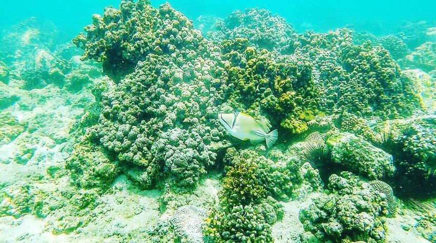 Growth Plant Green Color Nature No People Day Beauty In Nature Sunlight Outdoors Underwater Tree Freshness Flower UnderSea Sky