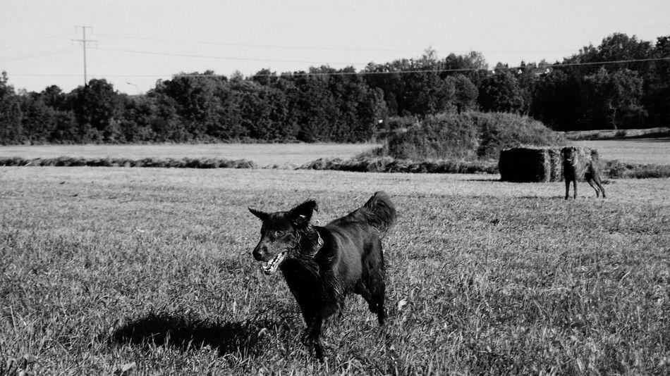 Black & White Dogs Dog Animals