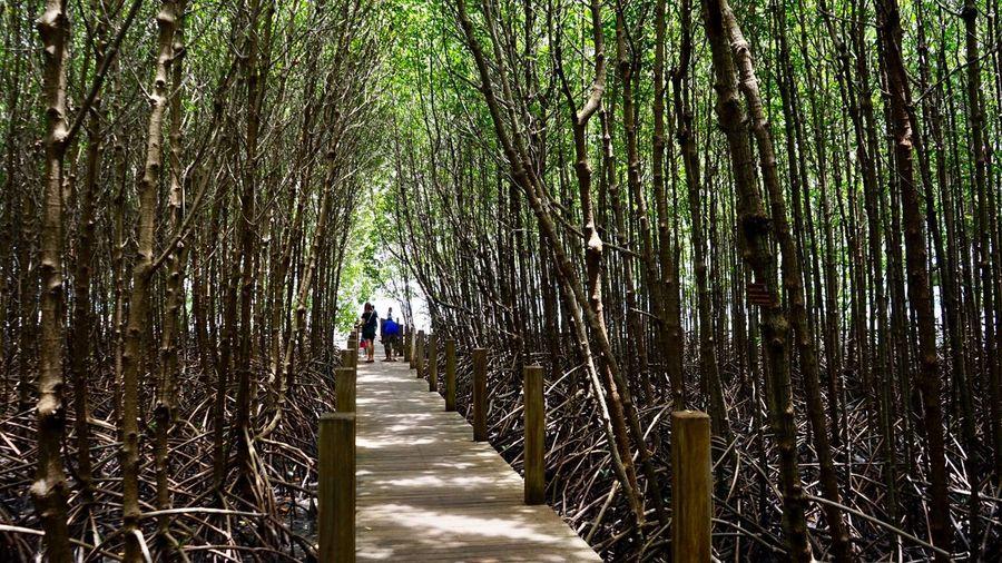 ศูนย์ศึกษาการพัฒนาอ่าวคุ้งกระเบนอันเนื่องมาจากพระราชดำริ จันทบุรี Chanthaburi Thailand Real People Walking The Way Forward Tree Day Growth Men Nature Lifestyles Women Outdoors Beauty In Nature People Adult Sony Sonya7m2