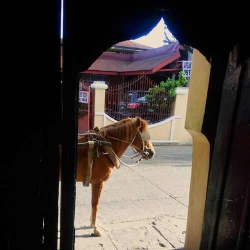 """This is what """"I have a ride"""" means in Vigan 15thlhepc"""